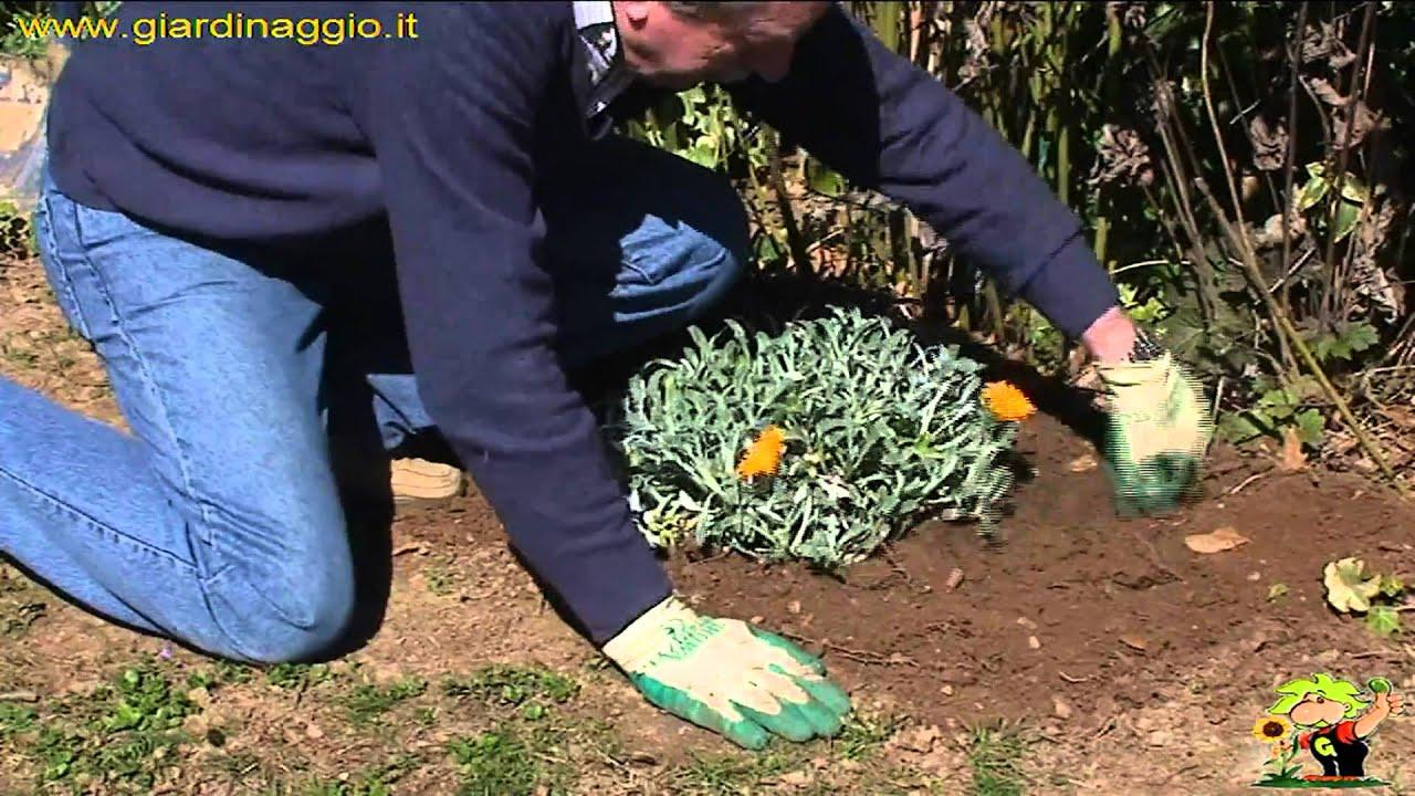 Coltivazione delle erbacee perenni youtube for Solo piante