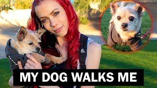 My Dog Walks Me | Miss Krystle and Artie