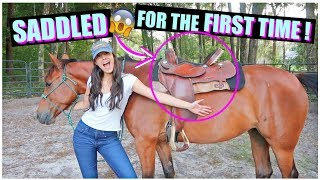 How I Saddled My Horse For The FIRST TIME! | Starting Brandy PT.6