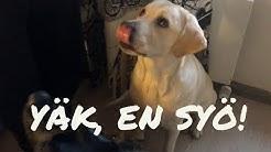 TESTASIMME: Mitä kaikkea koirat syö?