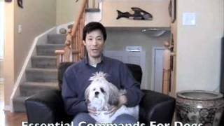 Free Dog Obedience Training Video To Teach Your Dog Essential Commands