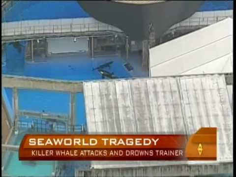 Kelly Cobiella reports on a killer whale grabbing and drowning a veteran trainer at SeaWorld in Orlando, Florida (February 25, 2010)