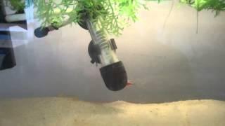 Triops Day 17 - Cleaning the triops aquarium