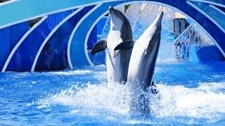 Шоу с дельфинами - Голубые горизонты | Blue Horizons Dolphin Show at SeaWorld