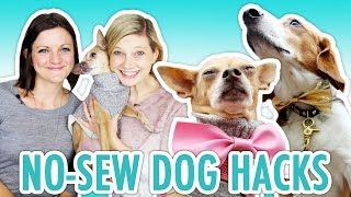 No-Sew Dog Clothes with Joselyn Hughes - HGTV Handmade
