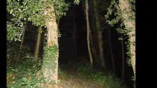 night hike through the woods with strange orbs or something