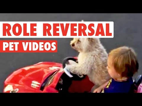 Role Reversal Pets || Funny Pet Compilation