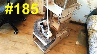 Башня для котов