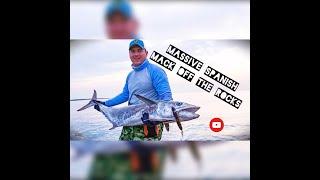 BIG LAND BASED Spanish Mackerel in the Persian Gulf #fff safaris #fishing of the rocks