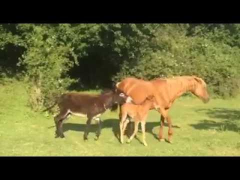 Секс с с конём видео отличная