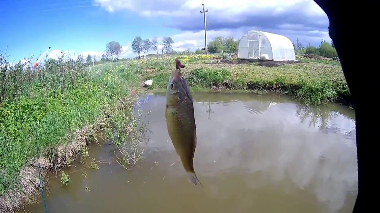 Рыбалка ловля карася на пруду