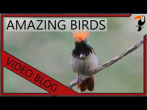 Amazing Birds - Tropical Birds Video