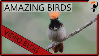 Amazing Birds - Tropical Birds Video