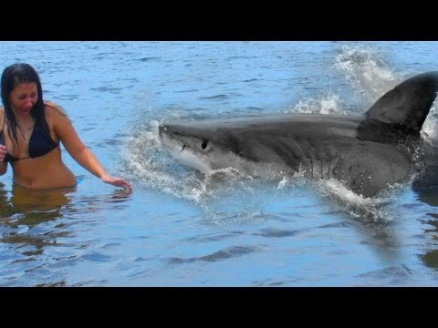 Shark Attack teen girl caught on video - Robe, Australia July 30, 2011