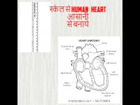 how to draw human heart easily by using....SCALE ..