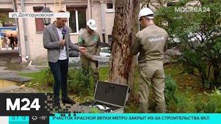 Смотреть видео В Тверском районе столицы москвичи дежурят сутками, чтобы спасти деревья - Москва 24 онлайн