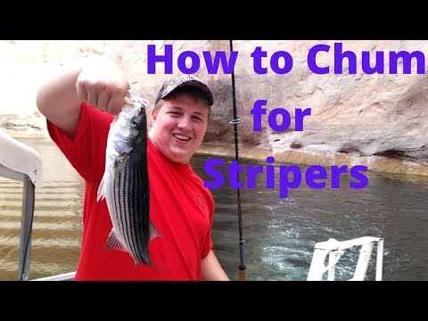 How To Chum For Stripers