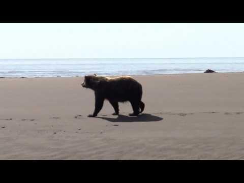 Silver Salmon Creek Bear Viewing