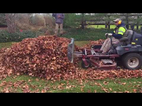 Fall clean up 2017