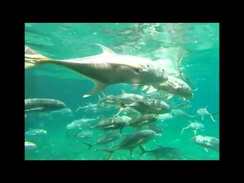 Sailfish Marina West Palm Beach, Feeding Frenzy