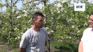 Zwalczanie miodówek w uprawie gruszy