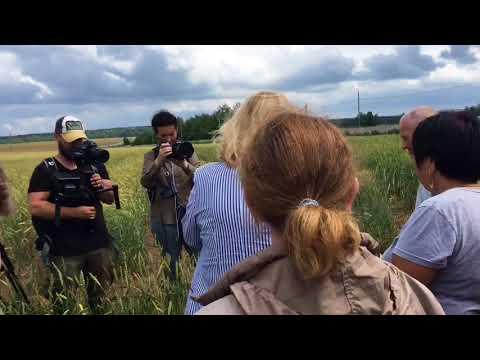О сортах яровой пшеницы Московской области рассказывает Давыдова Наталья