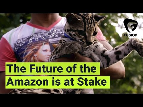 How Tourism and Illegal Wildlife Trade Are Threatening the Amazon Rainforest