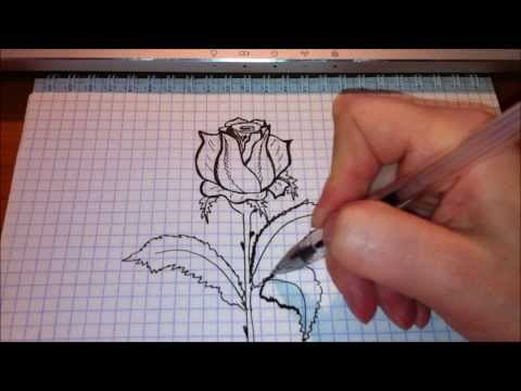 Штамбовая роза Аполо tvoy sadcomua