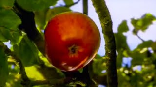 How did Isaac Newton really discover gravity - apple or comet? BBC science