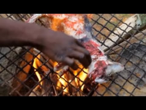 exotic food, cats and dogs eaten as food | documentary