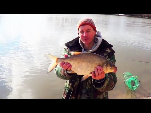 Рыбалка на Фидер, Весенняя ловля Леща на Москва Реке , огромный Лещ кончик фидера шатал