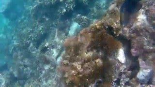 Snorkeling on the Catamaran Tour near Ocho Rios, Jamaica