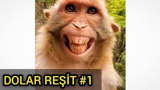 Dolarla Savaşan Maymunlar 1 (Antep Dublaj)