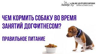 Правильное питание собаки во время Дог Фитнеса. Чем кормить спортивную собаку?