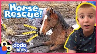 Trapped! Friends Save A Wild Horse Stuck In Mud | Rescued! | Dodo Kids