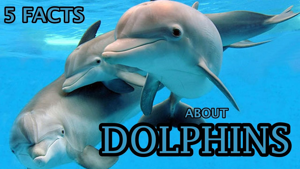 5 Facts About Dolphins - Dolphin Facts For Kids - YouTube