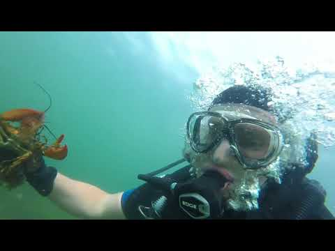Lobster Diving Cape Cod