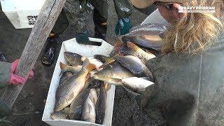 Rybářskomyslivecké oslavy v Rožmitále