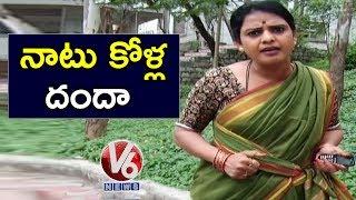 Teenmaar Chandravva Plan To Start Country Hen Business | Teenmaar News | V6 Telugu News