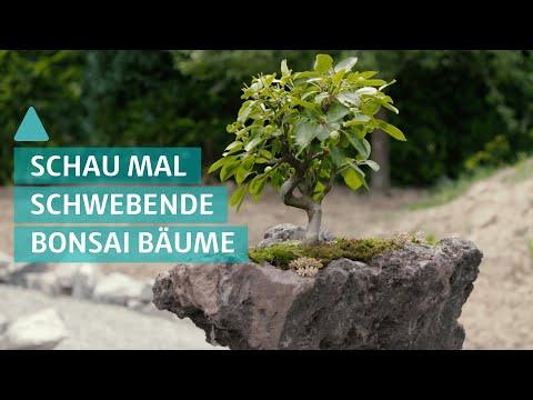 BAUEN & WOHNEN: Bonsai: Bonsaibäume als schwebende Gärten