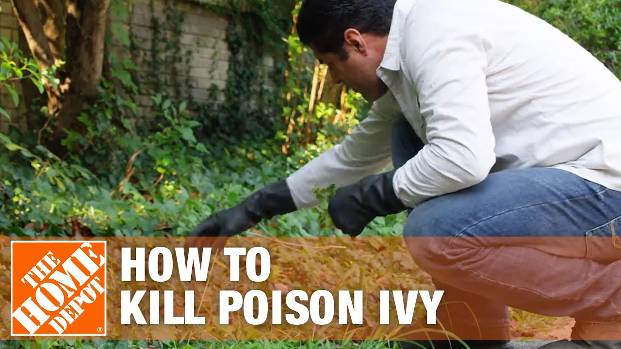5 ways to get rid of poison ivy plants from your lawn | the home depot