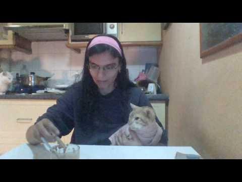Alimentando un gato enfermo