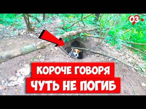 КОРОЧЕ ГОВОРЯ, ЧУТЬ НЕ ПОГИБ В ЛЕСУ. Говорящая собака ЛОКИ БОБО.
