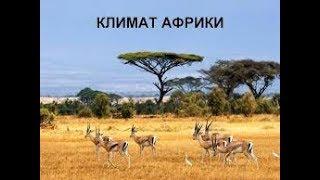 Общие особенности климата  Африки. География 7 класс