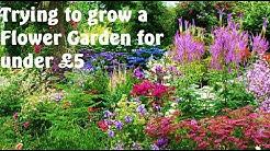 Allotment Diary : Attempting a Flower Garden & Quick update.
