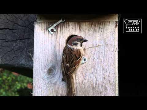 Bird houses Best for Birds