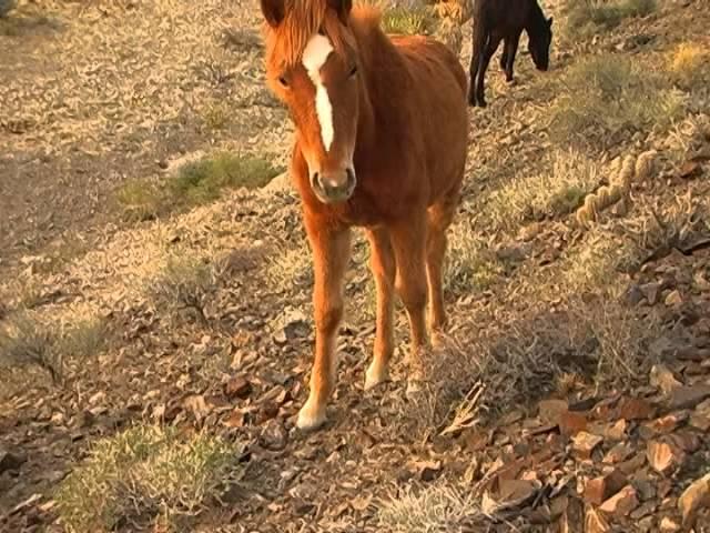 Cold Creek Wild Horses