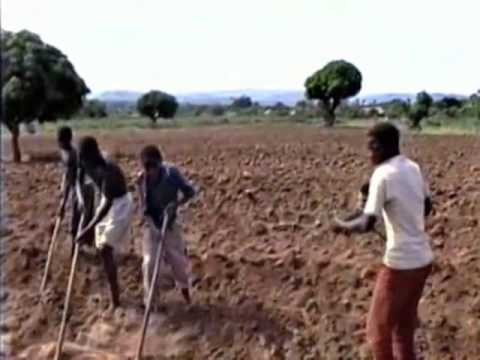 Musical Labor Performed in Northwest Tanzania
