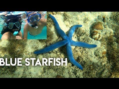 The Blue Starfish + So Beautiful!