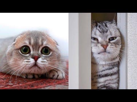 Cutest Kittens I've Ever Seen 😍 Cute Cats Video 2019